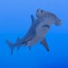 olivine's avatar